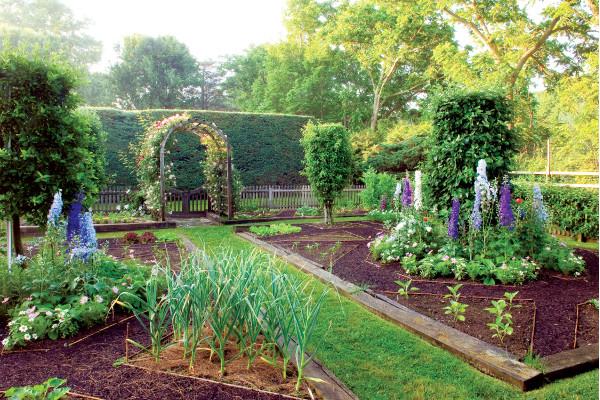 Сад на дачном участке своими руками фото