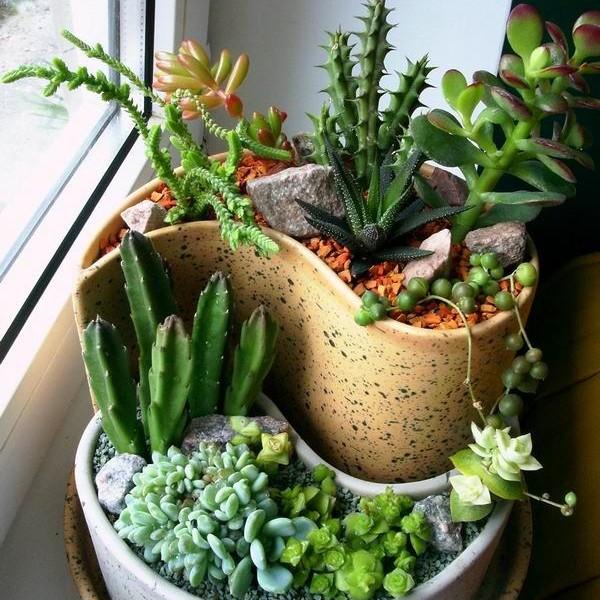 Суккулентов уход в домашних условиях фото виды - Wind Plast