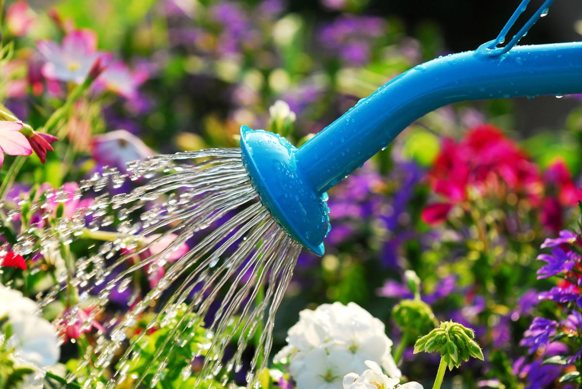 Почему нельзя поливать цветы холодной водой