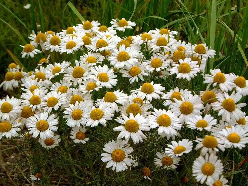 Как цветок не может без солнца