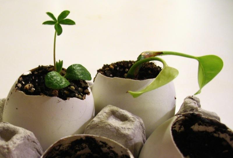 Удобрения для домашних растений своими руками