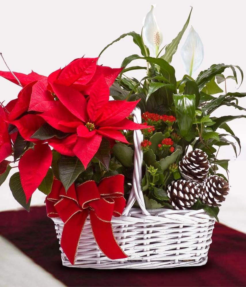 Комнатные растения красивые на подарок