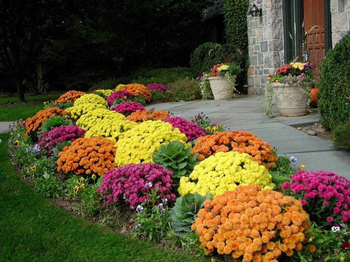 Садовые цветы для клумб