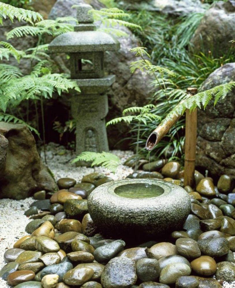 Бамбук в саду своими руками